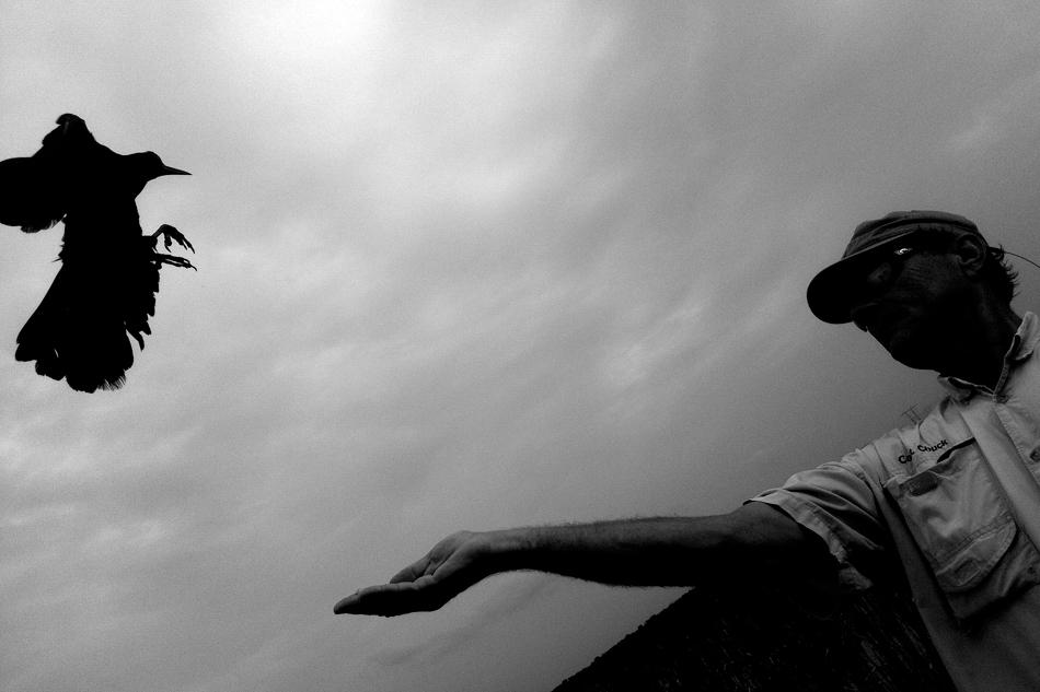 Everglades boat ride, ravens